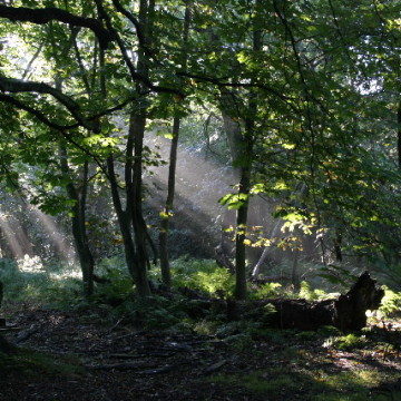 Gosforth Park Nature Reserve, photographed by Phil Thirkell and licensed for reuse under Creative Commons
